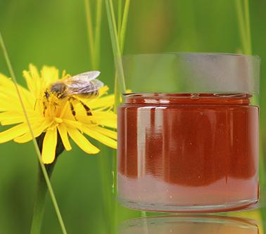 Honig aus Österreich